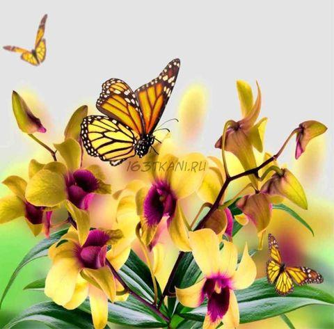 Бабочка 4.2