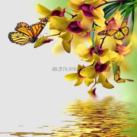 Бабочка 4.3