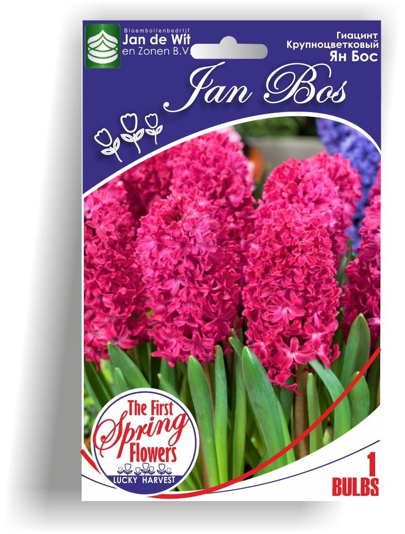 Луковицы Гиацинта Jan Bos  (Ян Бос) TM Jan de Wit en Zonen B.V. ( количество в упаковке 1 луковица)