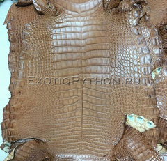 Кожа крокодила SK-36