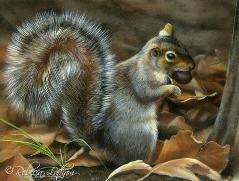 Картина раскраска по номерам 50x65 Белка с орешком