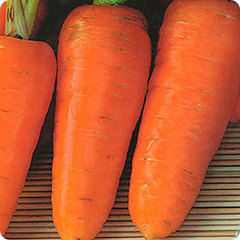 Шарлотта семена моркови курода/шантане (Гавриш)