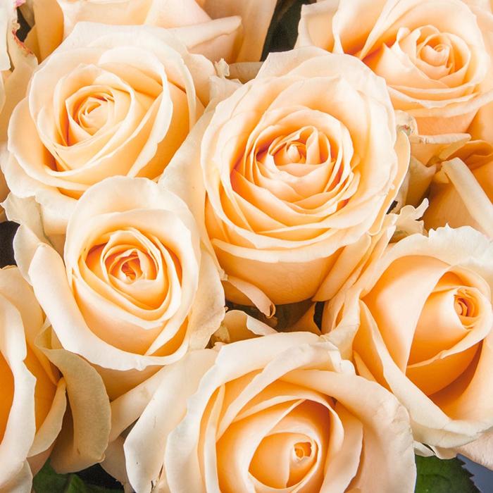 Купить персиковые розы букет в Перми