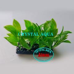 Растение Атман H-153B, 10см