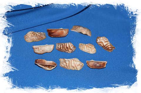 Ракушки Арка пеанут 400 гр.