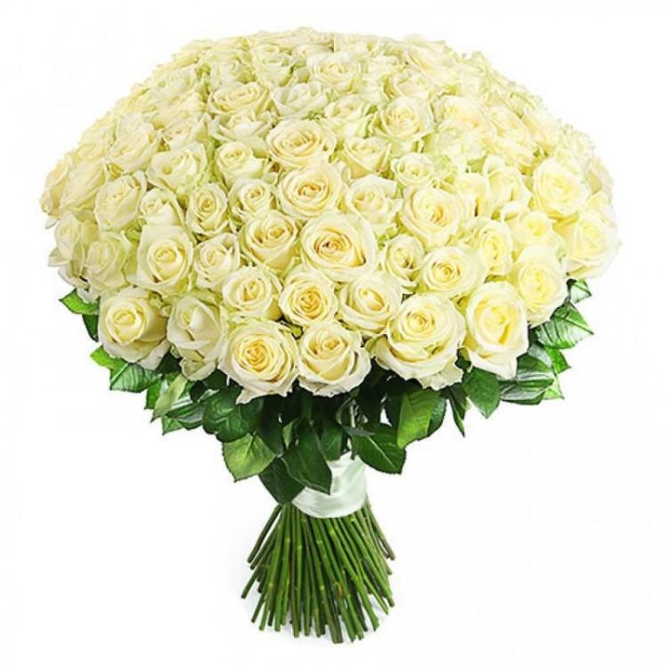 101 белая роз (60 см)