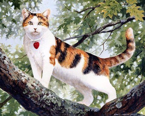 Картина раскраска по номерам 50x65 Разноцветный кот на дереве