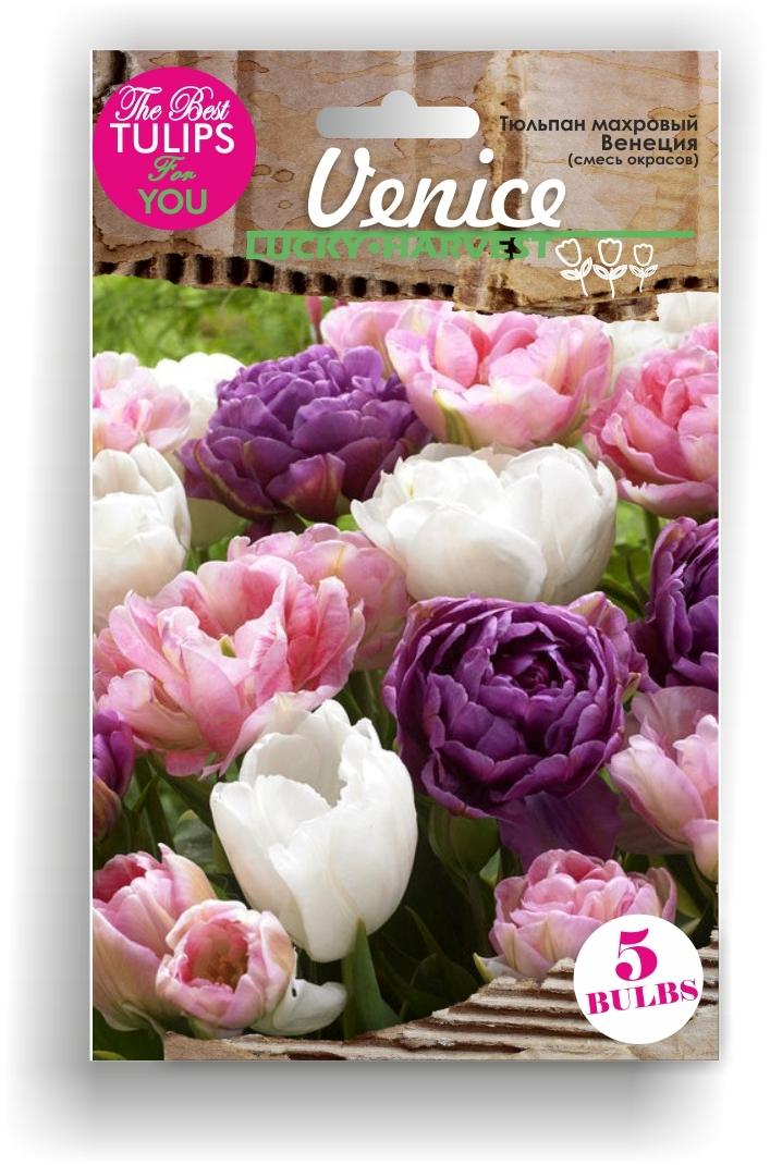 Тюльпан Махровый смесь Venice (Венеция) ТМ LUCKY HARVEST 5 шт (Мелкая луковица)