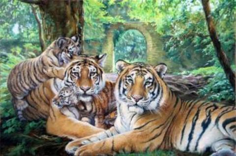 Картина раскраска по номерам 50x65 Семейство тигров