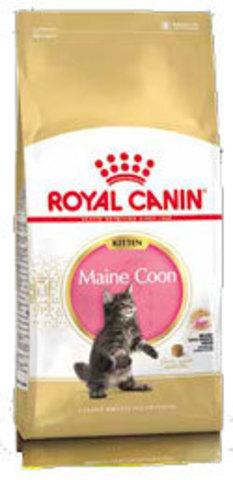 Корм для котят породы Мейн-кун