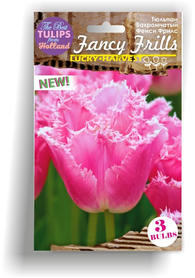 Тюльпан Бахромчатый поздний Fancy Frills  (Фэнси Фрилс) Нидерланды 3 шт