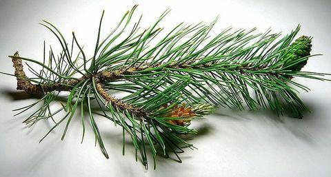 Сосны эфирное масло (Pinus silvestris oil).