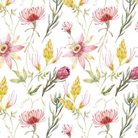Цветы Австралии