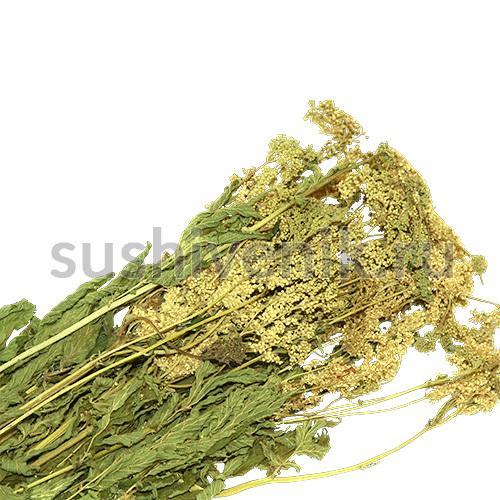 Таволга - травяной сбор