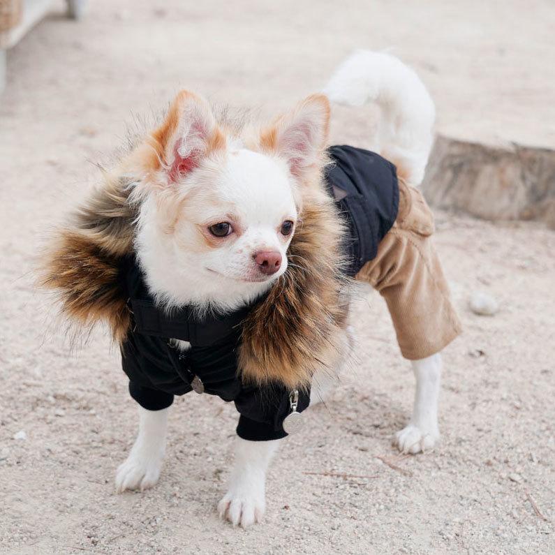 куртки парки для чихуахуа