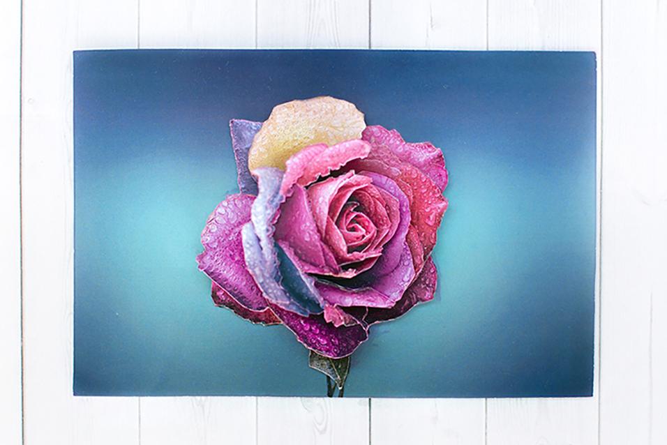 Радужная роза - готовая работа, фронтальный вид.