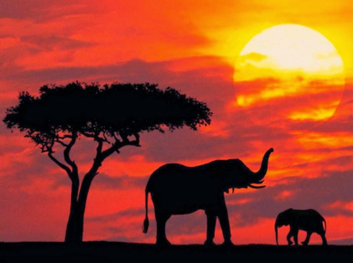 Картинки закатов с животными