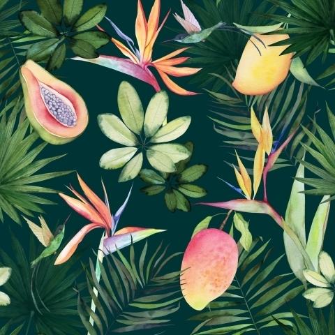 Тропические фрукты и темные листья. Акварель