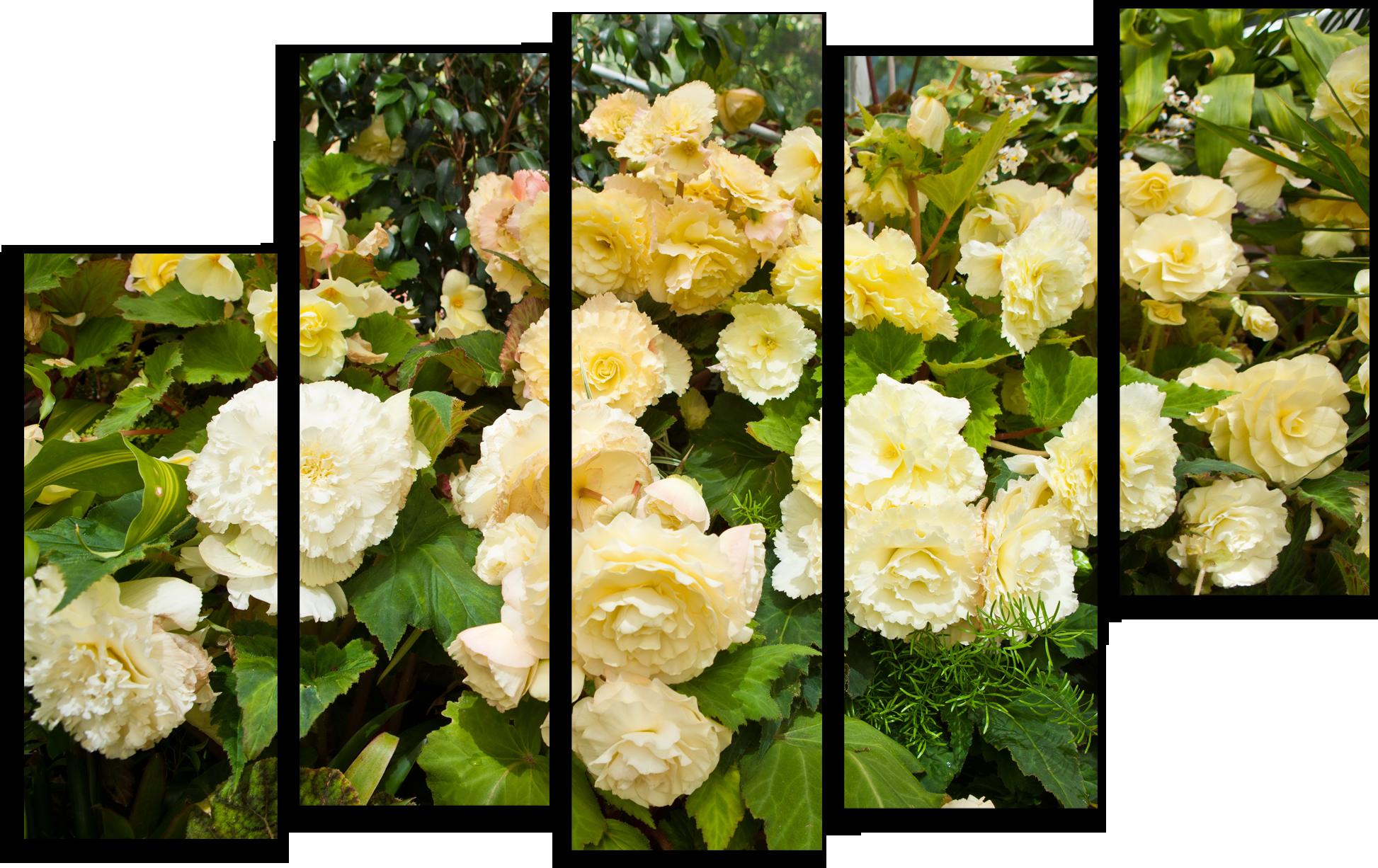 """Цветы Модульная картина """"Роза Эльф"""" М678.png"""
