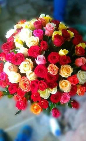 101 роза Радужный микс 60 см
