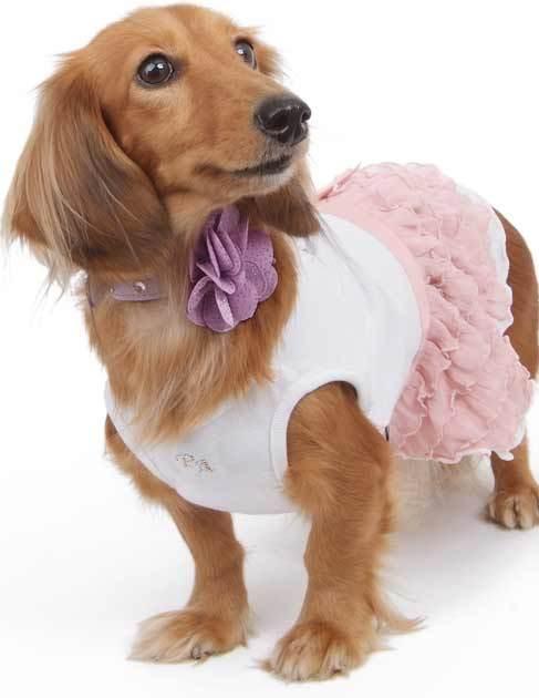 вечернее платье для маленькой собачки