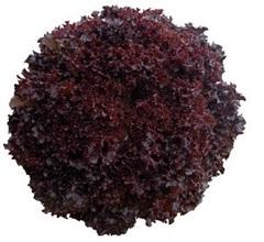 Бакус семена салата лолло росса (Vilmorin / Вильморин)