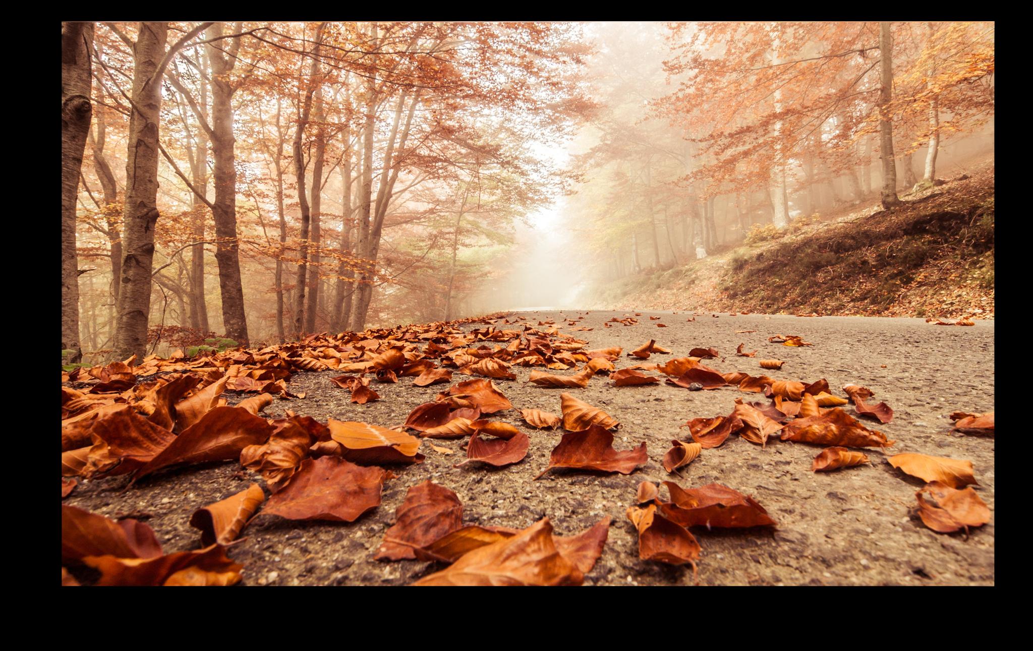 """Постеры Постер """"Осенние листья"""" п55.png"""