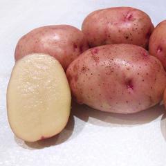 Картофель Жуковский (1 кг)