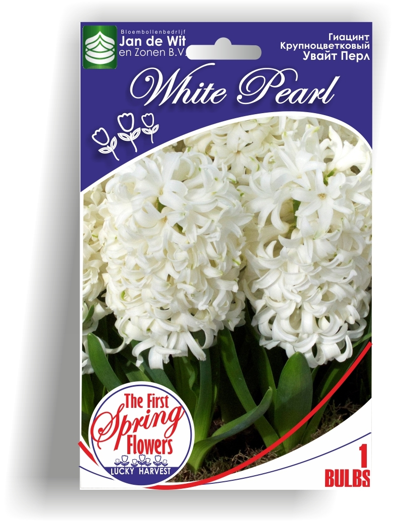 Гиацинт   White Pearl (Уайт Перл) TM Jan de Wit en Zonen B.V.  ( количество в упаковке 1 луковица)
