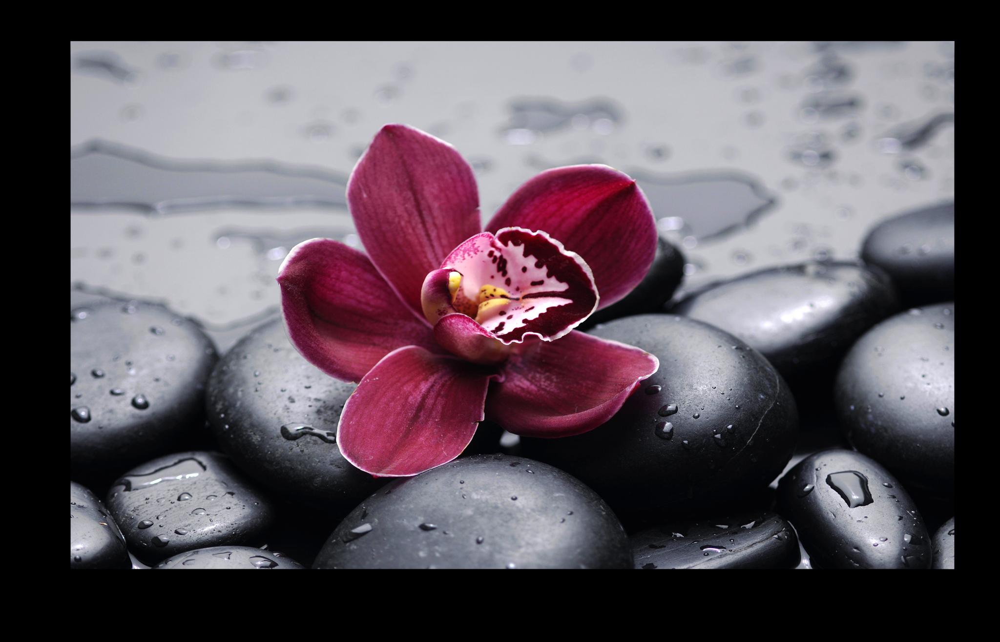 """Постеры Постер """"Красная орхидея"""" п282.png"""