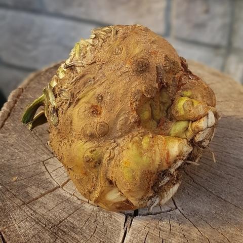 Сельдерей корневой БИО (Васильки), кг