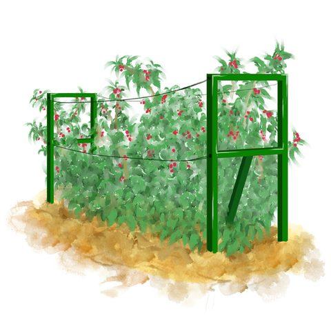 Опора для малины Зеленая (1500*500*15 мм) 2 шт