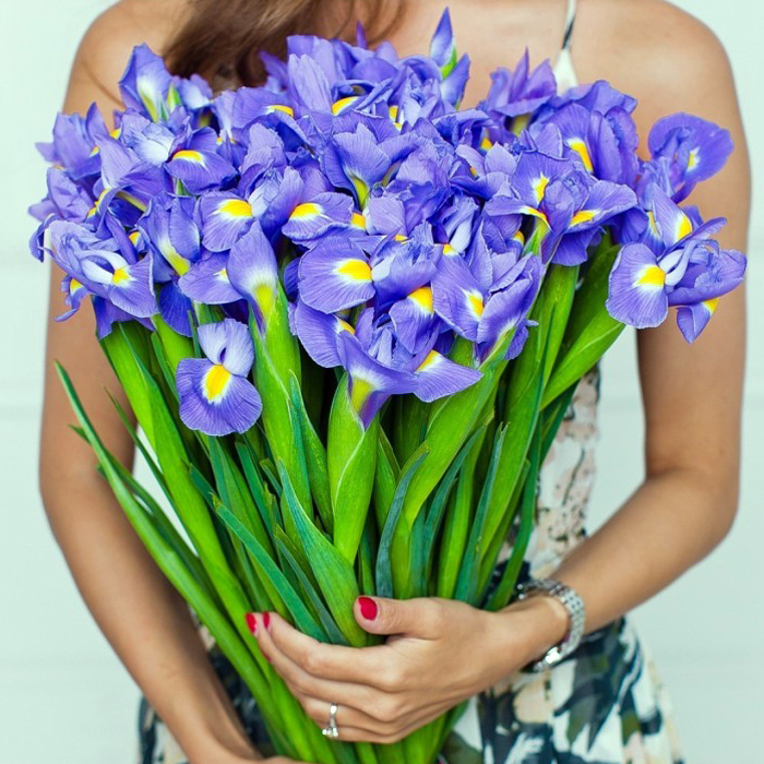 Купить букет ирис синий Блю Мейджик в Перми