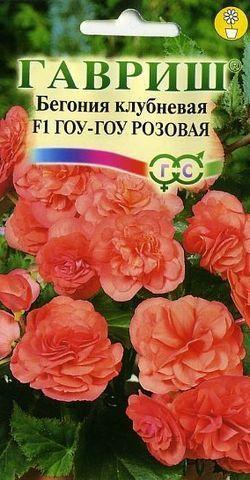 Бегония гоу-гоу розовая