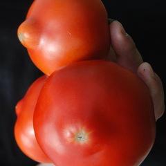 Примо ред F1 семена томата детерминантного (Clause / Клос)