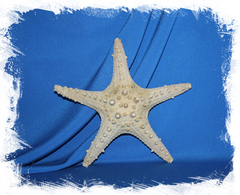 Морская звезда для декора интерьера