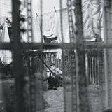 Paul McCartney / Chaos And Creation In The Backyard (CD)