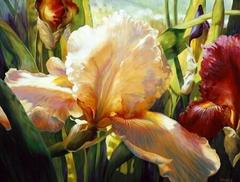 Картина раскраска по номерам 40x50 Цветы вблизи