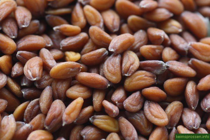 Кресс-салат семена BIO, 100г (Италия)