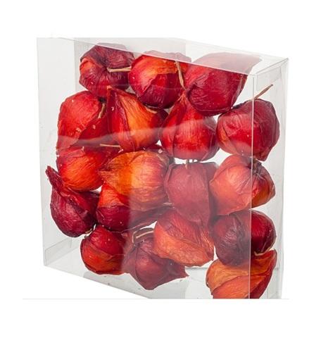 Набор физалиса искусственного 12шт., D4х6см, цвет:темно-красный