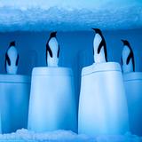 Форма для приготовления домашнего мороженого эскимо Penguin on ice Qualy QL10190-WH | Купить в Москве, СПб и с доставкой по всей России | Интернет магазин www.Kitchen-Devices.ru