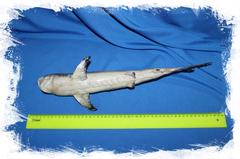 Акула декоративная размер
