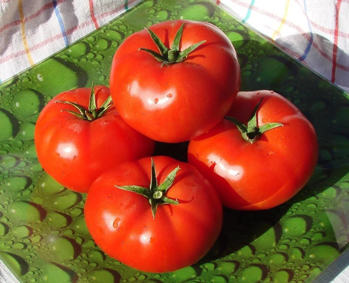 Красный Эйджен F1 семена томата индетерминантного (Enza Zaden / Энза Заден) Эйджен_F1-.jpg
