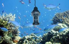 Подводная камера для рыбалки «FishCam-360» с углом обзора 360 градусов (Sititek)