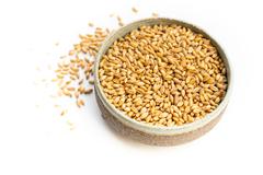 Пшеница БИО