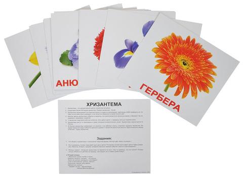 Развивающие карточки «Цветы» 6 м+