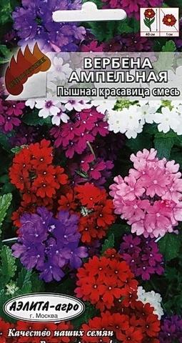Семена Вербена Изящная красотка смесь, Одн