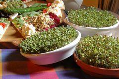 Проращиватель Eschenfelder для семян микрозелени, 21 см белый