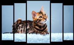 """Модульная картина """"Леопардовая кошка"""""""