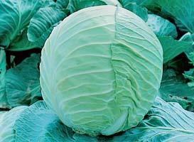 Белокочанная Эрдено F1 семена капусты белокочанной (Syngenta / Сингента) Эрдено_F1.jpg